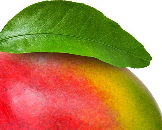 150+ druhov exotických plodov